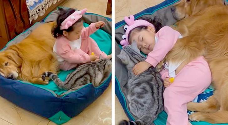 La petite fille fait une sieste en serrant son chien et son chat : un moment de rare chaleur et de tendresse