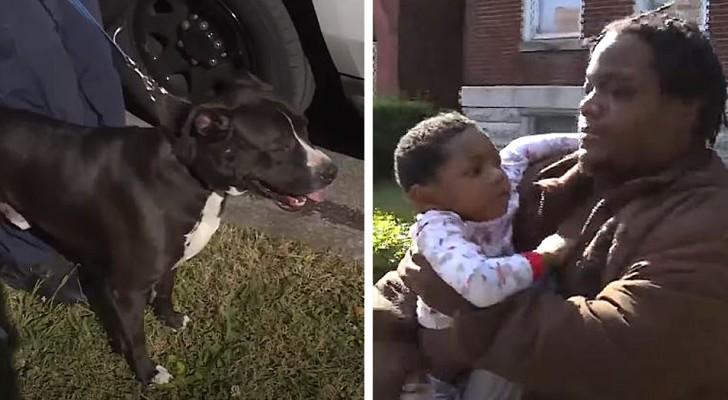 En herrelös hund skyddade ett barn som hade tappat bort sig utanför hemmet under flera timmar, hunden är nu hans personliga hjälte