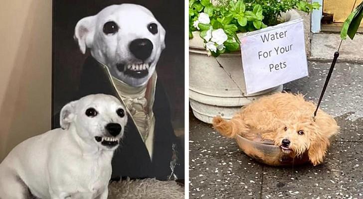 16 hele grappige honden waarbij het onmogelijk is om niet te lachen