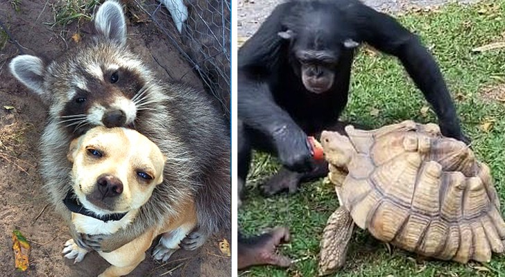 17 photos of unusual friendships between animals tolight up even our darkest days