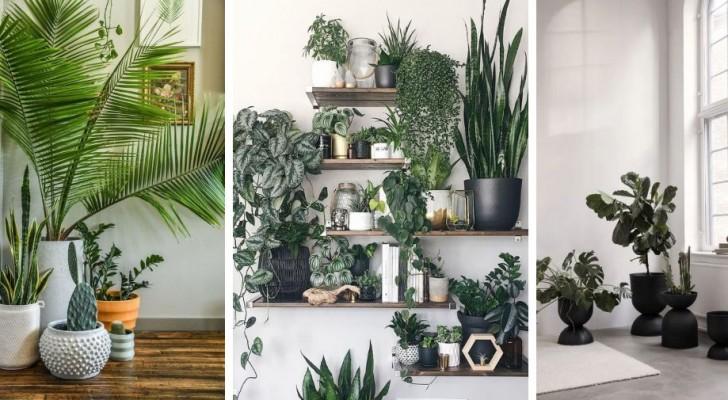 10 propositions les unes plus belles que les autres pour meubler votre salon avec les plantes et du vert