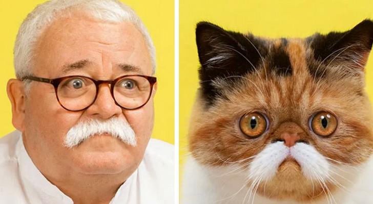 Gatti e umani a confronto: 11 foto dimostrano la sorprendente somiglianza con gli amici felini