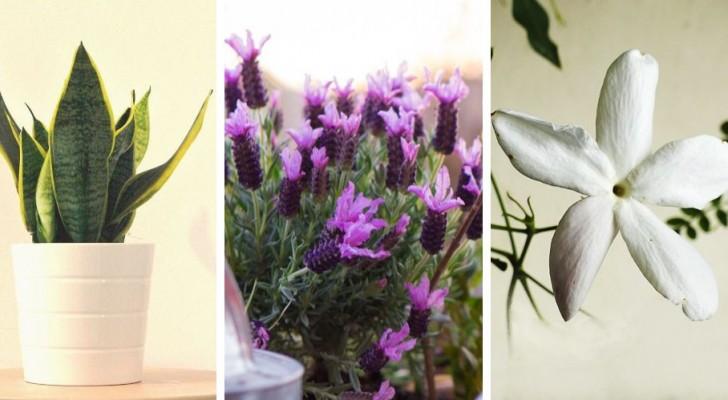 6 piante da tenere in camera da letto per migliorare la qualità del sonno