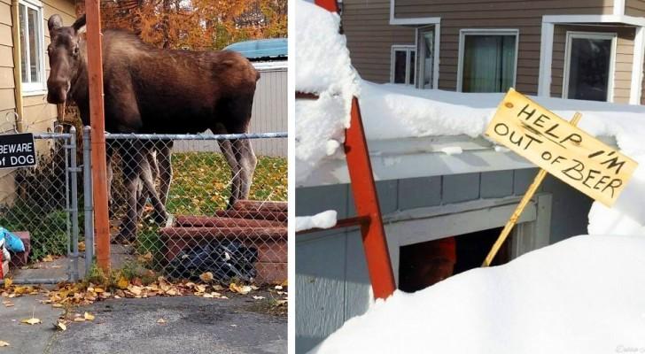 16 grappige foto's bewijzen dat Canada een land is met veel gevoel voor humor