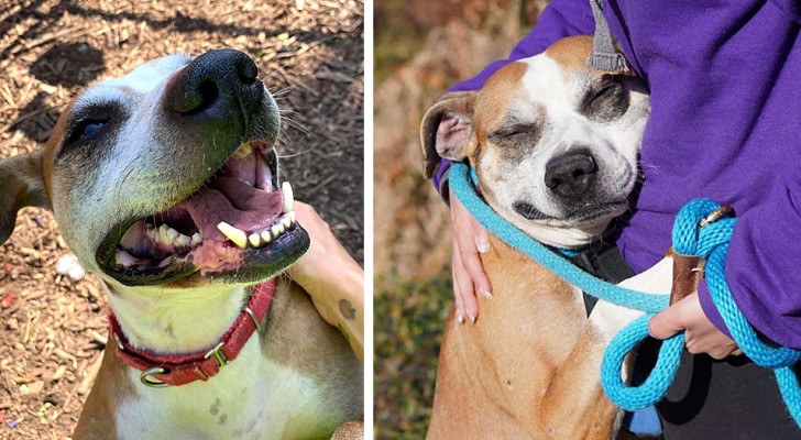 Questo cagnolino viveva trascurato e in catene: ora non può smettere di abbracciare chi lo ha salvato