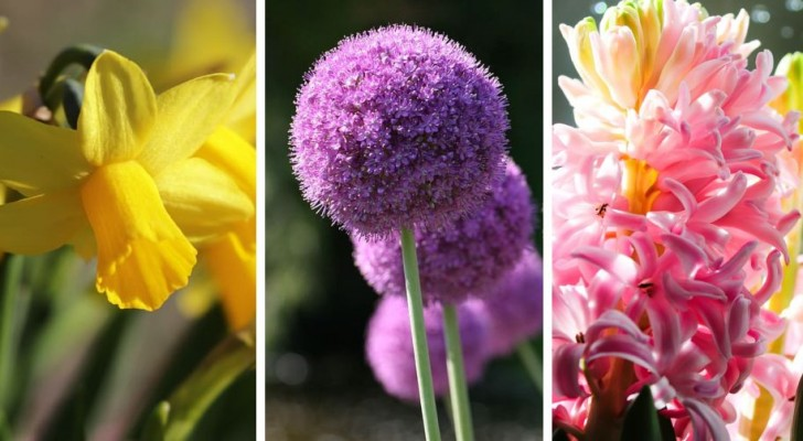 9 bulbi da piantare in autunno per godere di splendide fioriture primaverili