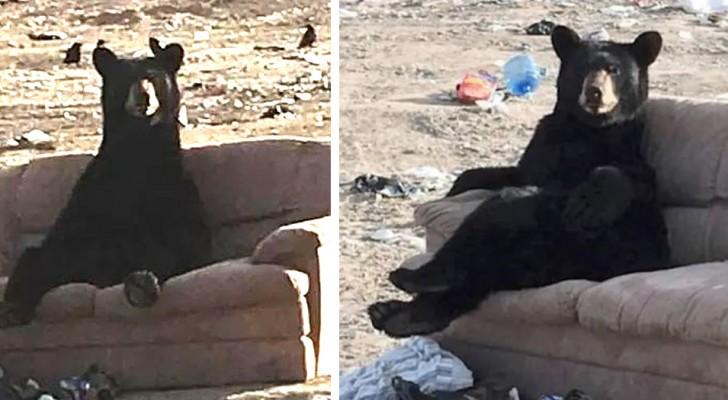 Una donna frena di colpo vedendo un orso seduto sul divano con le zampe incrociate