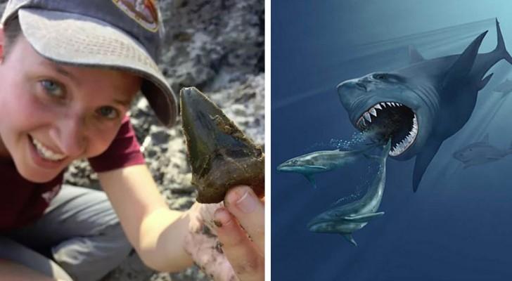 Usa, scoperti 87 enormi denti di mega-squali: facevano parte di un asilo nido preistorico
