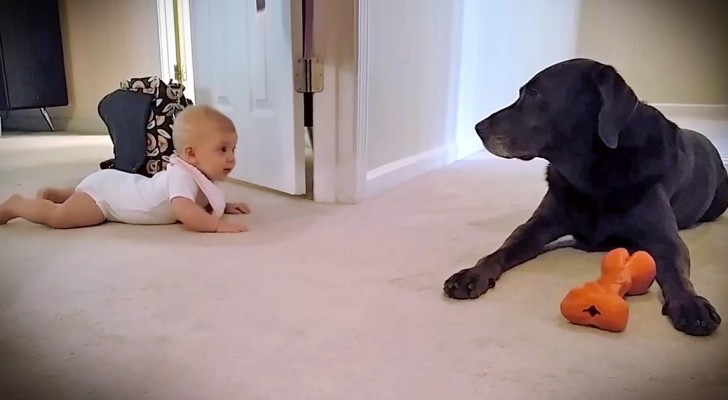A little girl learns to crawl, and the dog the rewards her in the cutest way ever !