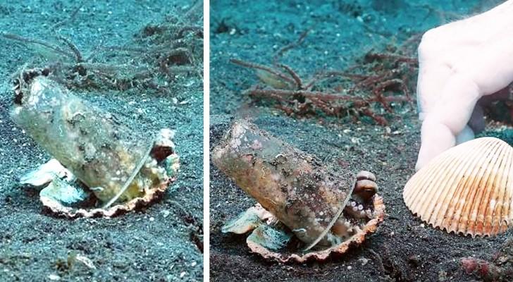Een duiker overtuigt een octopus om de plastic beker die hij als zijn