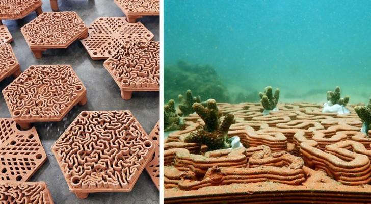 Ricostruire la barriera corallina grazie alla stampa in 3D: il progetto dei ricercatori di Hong Kong