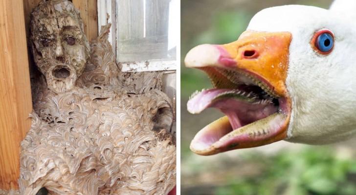 De andere kant van de natuurlijke wereld: 15 foto's van dieren en de natuur die ons kunnen laten schrikken