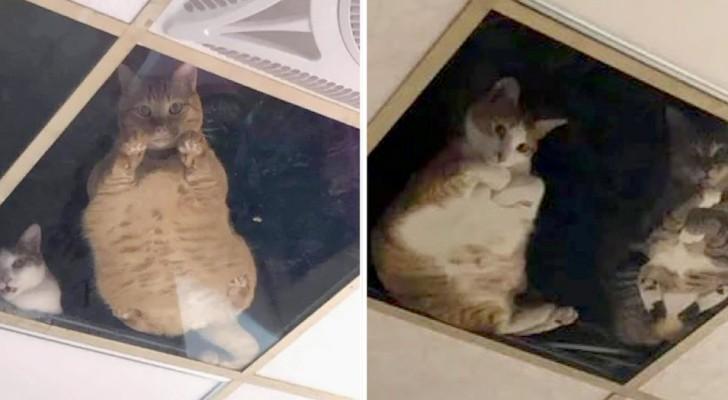 Una donna installa un soffitto trasparente dove i gatti al piano di sopra possono controllare la padrona ogni istante
