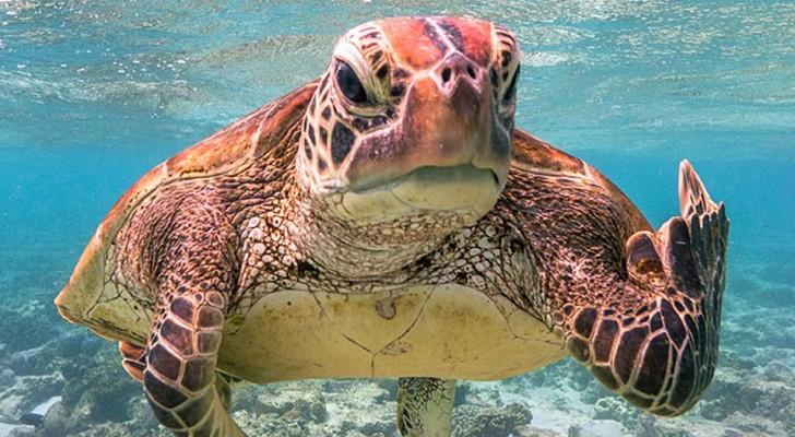 De foto van een schildpad die haar