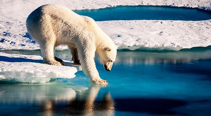 Per la prima volta, il ghiaccio marino siberiano non è riuscito a ricongelarsi entro la fine di ottobre