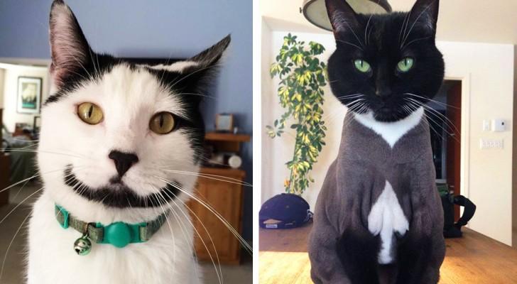 I 21 gatti più insoliti, nati con una macchia particolare sulla pelliccia che li rende unici al mondo
