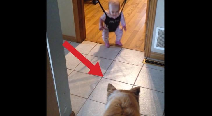 Ela ainda não sabe caminhar, mas ele ensina ela a pular