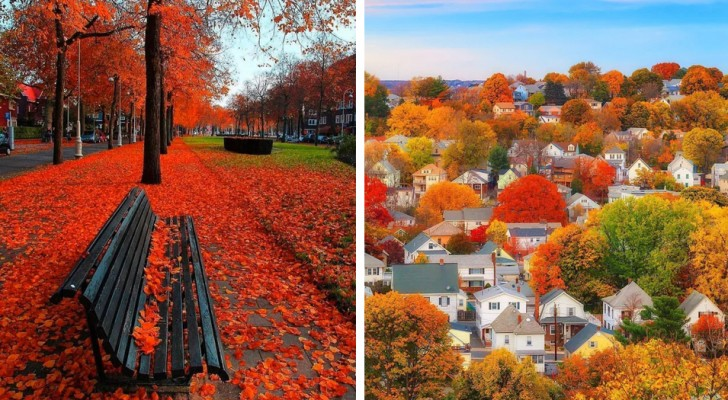 19 foto di boschi e città in giro per il mondo resi incantevoli dall'arrivo dell'autunno
