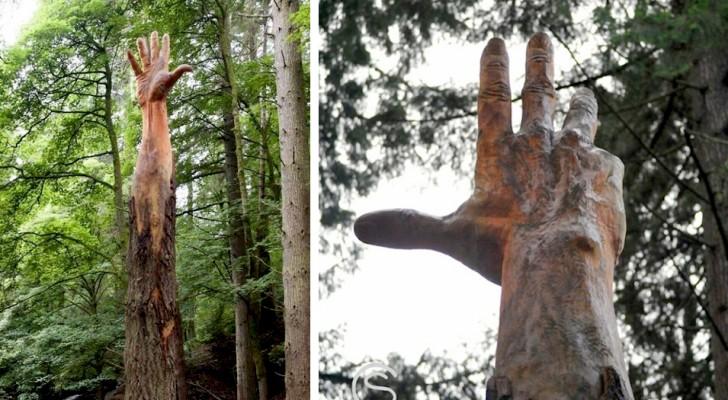 Un hombre transformó un árbol para talarlo en una gigantesca mano que se extiende hacia el cielo