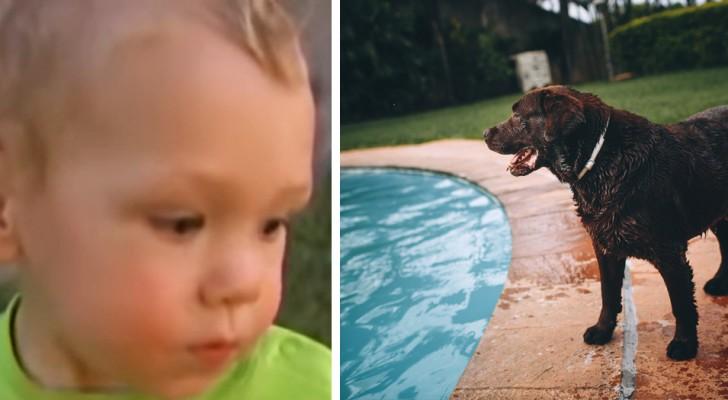 Een 1-jarig kind dreigt te verdrinken in het zwembad, maar zijn hond gooit zichzelf in het water om het ergste te vermijden