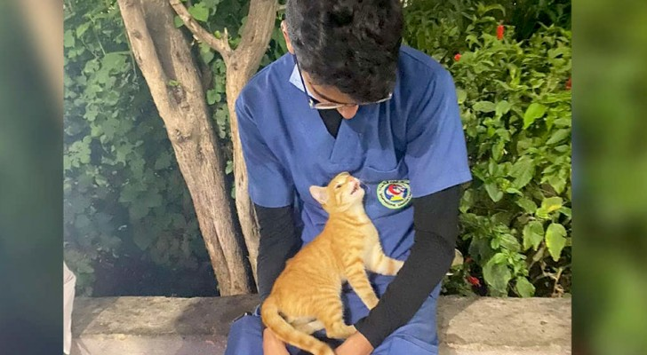 En kattunge hoppar upp i famnen på en sjuksköterska under rasten och tröstar honom genom att spinna och stryka sig