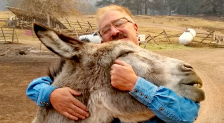 A donkey and a horse survive a fire on a farm: their embrace with the owner is truly touching
