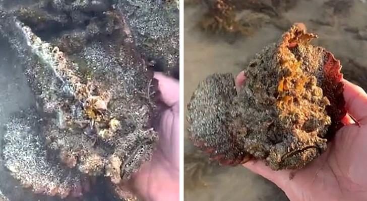 Wat men al niet doet om opgemerkt te worden: een man filmt zichzelf terwijl hij met zijn blote handen de meest giftige vis ter wereld pakt