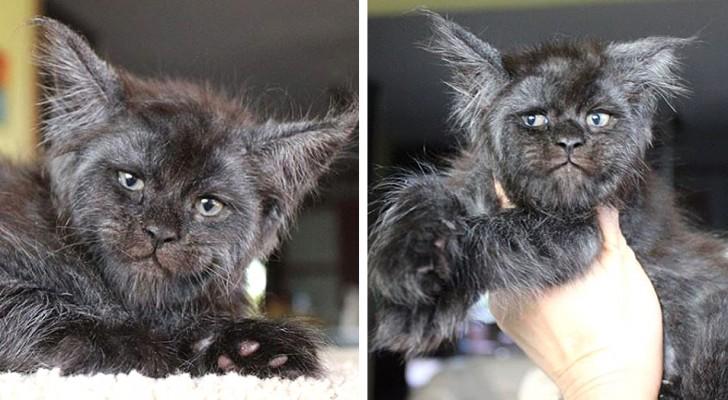Valkyria, katten med det mänskliga ansiktet som förtrollar en tusentals människor i hela världen med sina uttryck