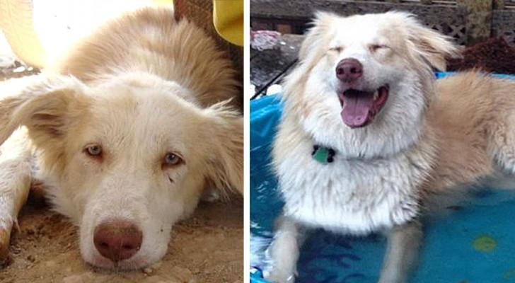 Deze foto's tonen 18 dieren voor en na adoptie: ze hebben een glimlach en een beter leven gevonden