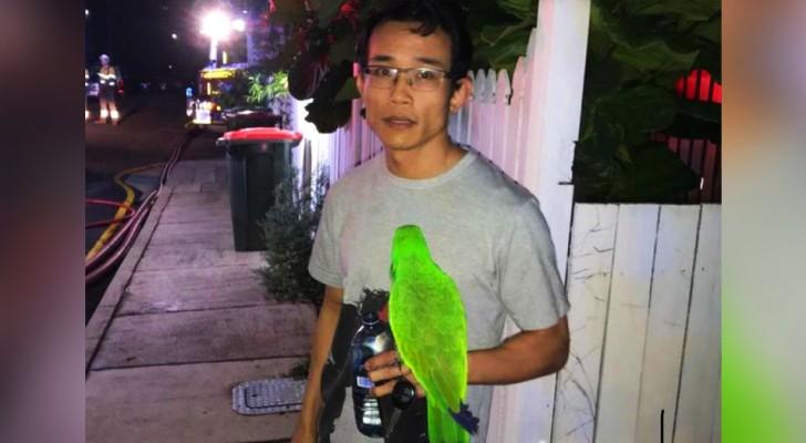 Il pappagallo urla il nome del suo padrone nel cuore della notte, salvandolo da un terribile incendio