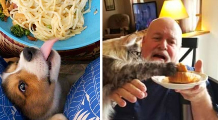 17 naughty pets who were caught red handed while stealing their masters' food