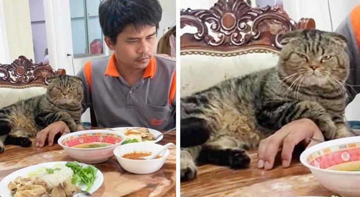 18 gatti orgogliosi di dominare completamente le vite dei loro padroni