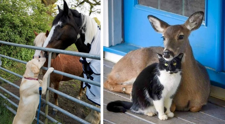 15 cute animals that know no differences when it comes to friendship