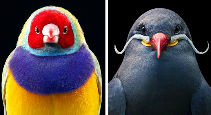 Deze fotograaf weet de zeldzaamste en meest kleurrijke vogels te vereeuwigen in fascinerende menselijke poses.
