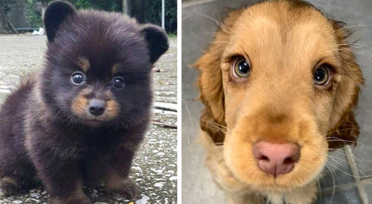 23 puppies so cute they don't even seem real