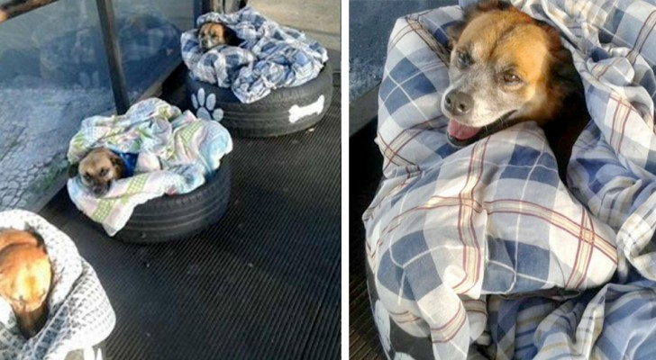 A bus station welcomes stray dogs in the area by offering them a warm blanket to sleep on