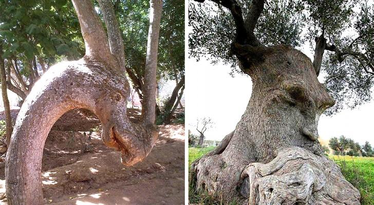 18 alberi che ricordano qualcos'altro e hanno confuso le persone con le loro forme bizzarre