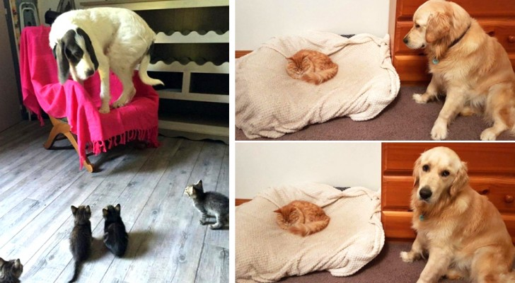 17 naughty cats who give their dog roommates a hard time