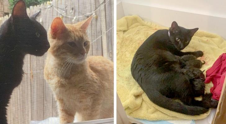 Een stel katten vragen hun menselijke buren om ze het huis binnen te laten, zodat ze in de warmte hun kittens op de wereld kunnen zetten