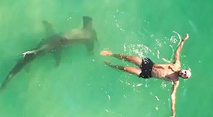 Un grosso squalo martello viene ripreso mentre nuota sotto a un uomo ignaro di tutto: il video è da brividi