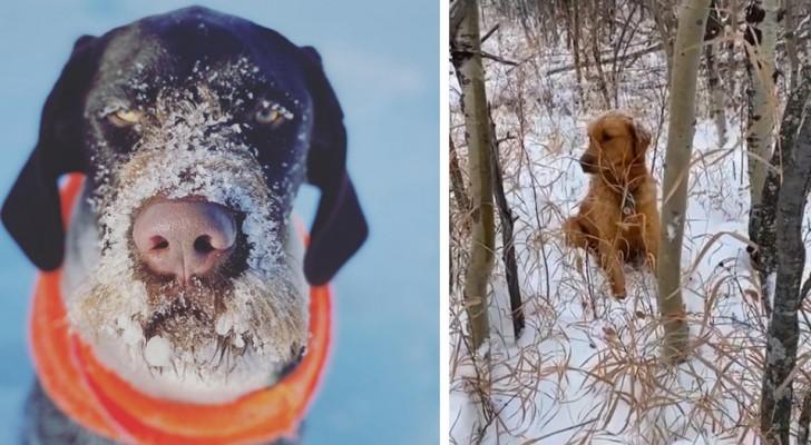 Un uomo e il suo cane portano in salvo un cucciolo rimasto bloccato dalla neve: il cane ne aveva fiutato il profumo