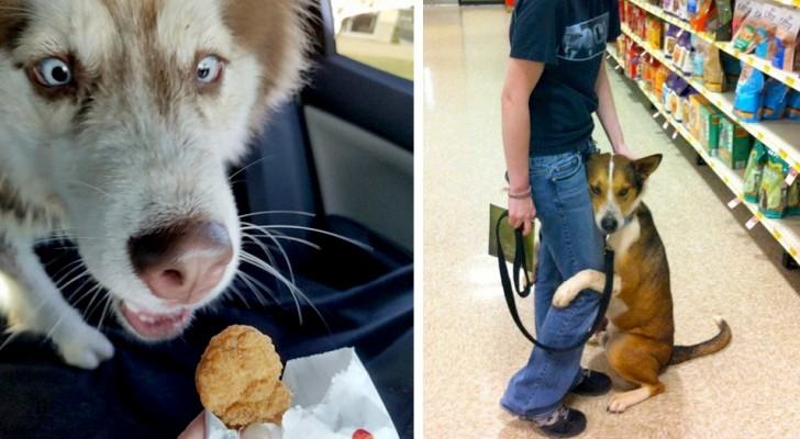 18 cani super-espressivi che hanno sorpreso i loro padroni con delle reazioni esilaranti