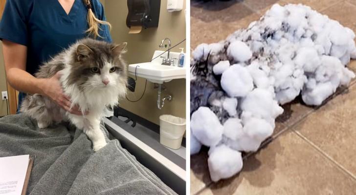 Trovano il loro gatto completamente congelato e ricoperto di neve: la corsa dal veterinario gli salva la vita