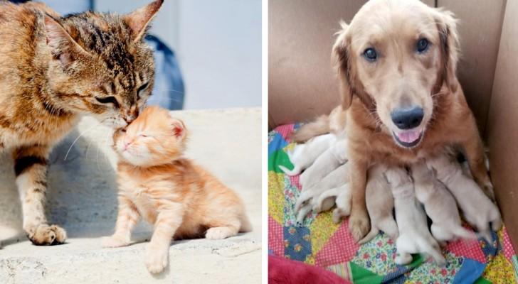 15 mamás de cuatro patas en donde el amor por sus cachorros no tiene la necesidad de ser explicado