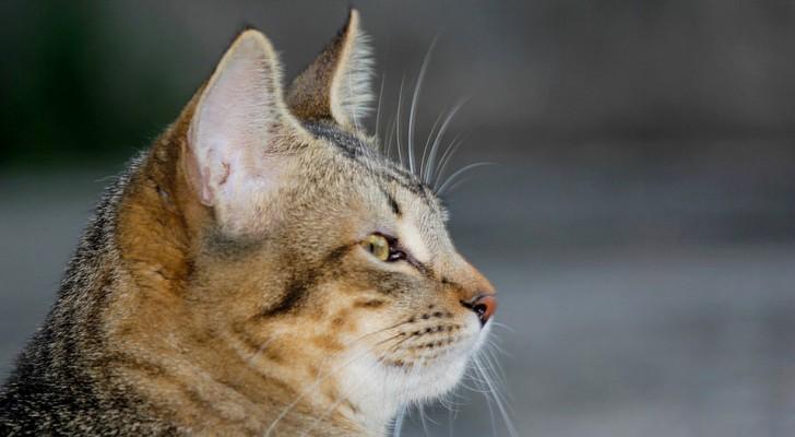 Prende a calci un gattino fratturandogli una zampa: 10.000 euro di multa