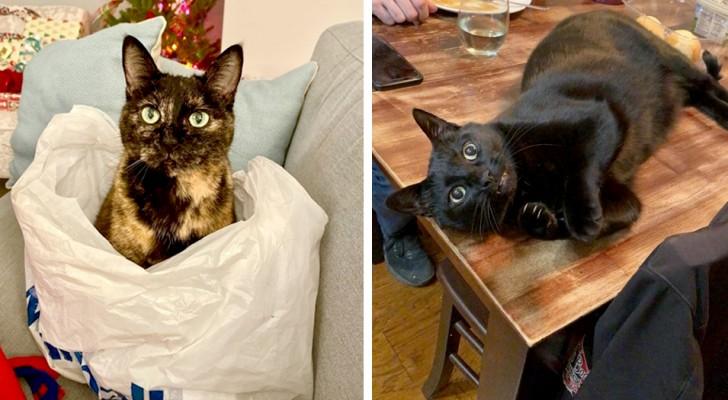 18 gatti talmente testardi a cui non è stato assolutamente possibile dire di no