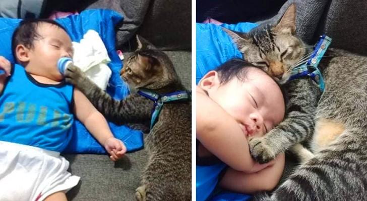 """De lieve foto's van de babysitter""""-kat die eerst de fopspeen van de baby controleert en hem daarna knuffelt terwijl hij slaapt"""