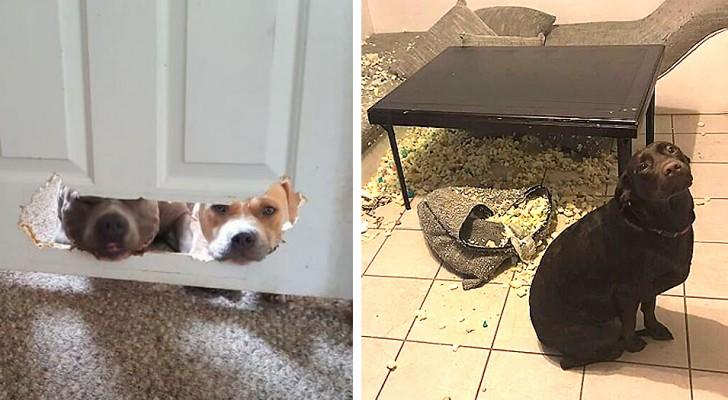 18 Hunde, die auf frischer Tat ertappt wurden, und die unwiderstehlich unschuldig dabei drein schauen