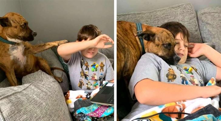 O cachorrinho tenta interromper de todas as formas a aula online do seu pequeno dono: a cena é hilária