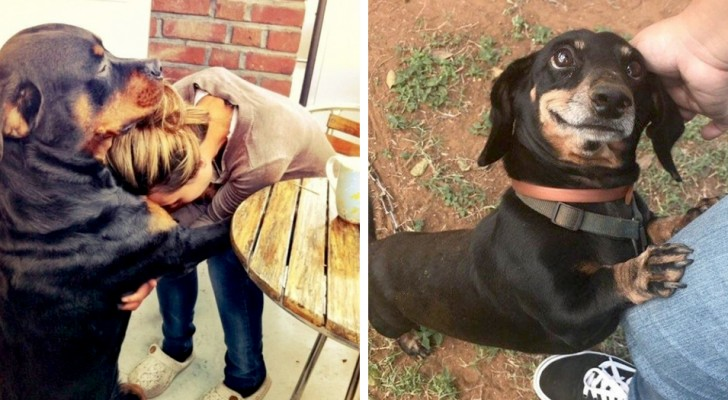 17 cute dogs that don't need words to express their eternal loyalty to humans
